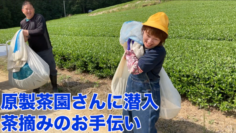 嬉野茶 原製茶園さんのお茶畑と工場見学
